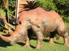 Umgeni Valley Reserve Rhino statue