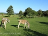 Umgeni Valley Reserve zebra (7)