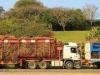 Sezela Sugar Mill - Cane trucks (2)