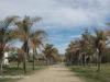 Inkamana-Abbey-roadway
