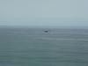 Isipingo  - Ocean Terrace  View - S 29.59.711 E 30.56 (2)