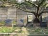 Isipingo - Dick King Graveyard - Delhoo Lane graves Tremearne family