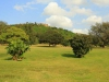 Isipingo Golf Course & Country Club- Fairway views  (9)