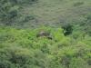 Ithala - Game - Elephant Herd 2 (10)