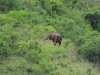 Ithala - Game - Elephant Herd 2 (11)