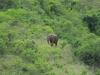 Ithala - Game - Elephant Herd 2 (12)