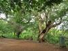 Ithala - Pongola Drive and picnic site (14)
