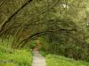 Ixopo Buddhist Retreat - forest walk (2)