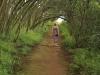 Ixopo Buddhist Retreat - forest walk (3)