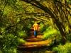Ixopo Buddhist Retreat - forest walk