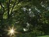 Ixopo Buddhist Retreat - the tranquil gardens (5)