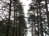 Ixopo - Sacred Heart Home Convent  trees