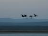 josini duck (2)