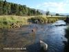 Glengarry Holiday farm river views (3)