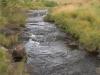 Highmoor Park - Kamberg - River Walk (4)