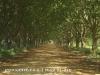 Kamberg Farm Road (1)