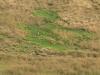 Kamberg - Obathwa Falls Walk - 6kms - Eland Herd