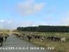 Kamberg area farm scenes .(.2) (1)