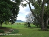 Karkloof - Barrington Farm - gardens (1)