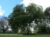 Karkloof - Barrington Farm - gardens (2)