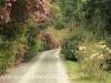 Benvie - entrance driveway (2)