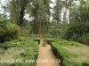 Benvie - garden maze (2)