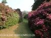 Benvie - gardens (34)