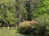 Benvie - gardens (48)