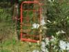 Benvie - gardens (57)