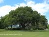 KARKLOOF - Colborne Farm House) (8)