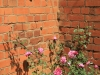 KARKLOOF - Colborne Farm  brickwork exterior (3)