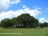 KARKLOOF - Colborne Farm  gardens (1.) (2)