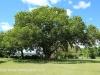KARKLOOF - Colborne Farm  gardens (2)