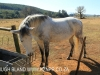 Shafton Grange horses (1)