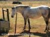 Shafton Grange horses (2)
