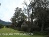 Shawswood garden shed (2)