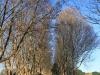 Kearsney College -  Entrance Plane trees