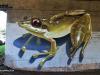 Kloof-overpass-graffiti-by-Giffy-44