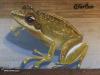 Kloof-overpass-graffiti-by-Giffy35
