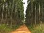 Kwabonambi