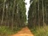 kwambonambe-forestry-1