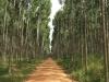 kwambonambe-forestry-2