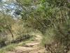 Caversham Mill -  Transport Riders Road (2)