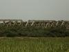 Mtunzini - Mlalazi  Rail Bridge - D28 - 28.56.089 S 31.46.816 E (2)