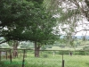 Ladysmith - Farqhuars Farm - Grave Anna Sophia de Waal - 1898. (1.) (2)