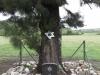Ladysmith - Intombi Camp Cemetery - Grave - 679 Pte JB Cohen (Jewish) - 1900 -  (5)