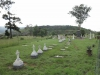 Ladysmith - Intombi Camp Cemetery - Grave - views from west end (4)