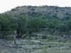 Tchrengula Hill from east - Hydes Farm (1)