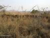 Platrand Wagon Hill - ILH fort (1)