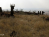 Platrand Wagon Hill gun emplacements (1)